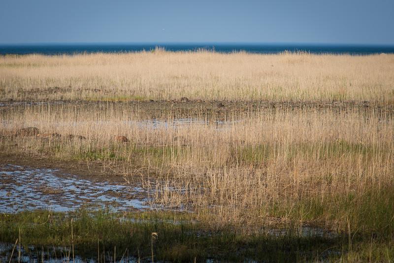 Eagle Bay - May 2013