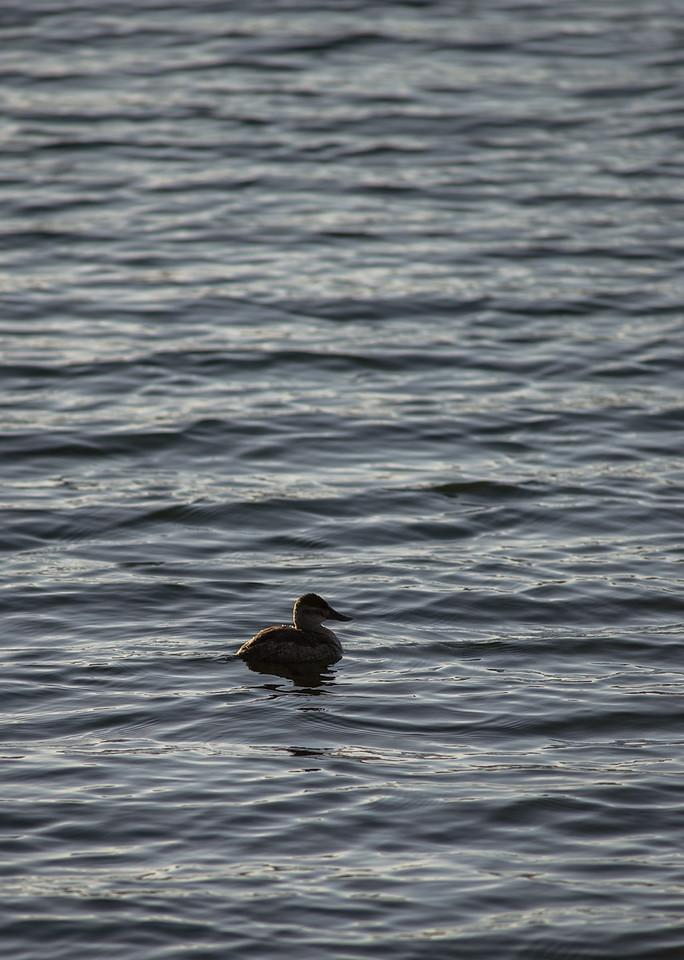 Lake Murray-8482