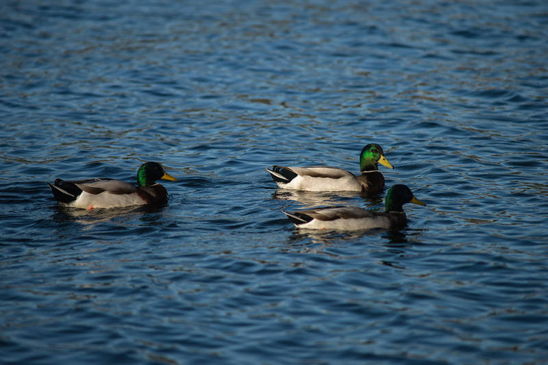 Lake Murray-8451