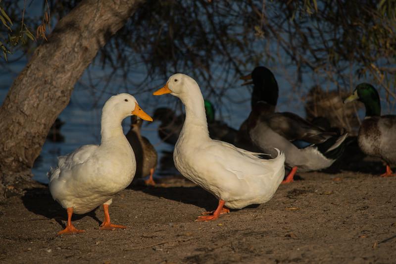 Lake Murray-8465