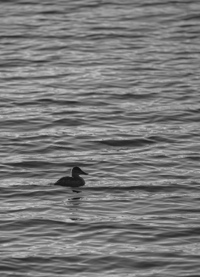 Lake Murray-8483