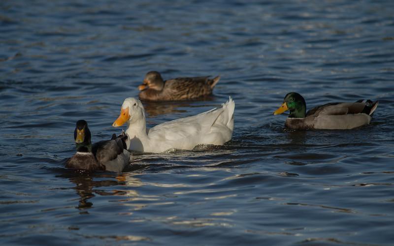Lake Murray-8473