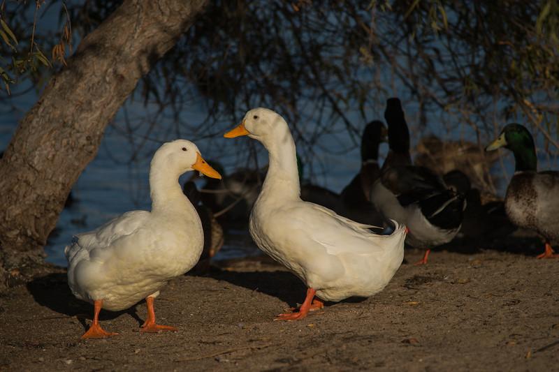Lake Murray-8466