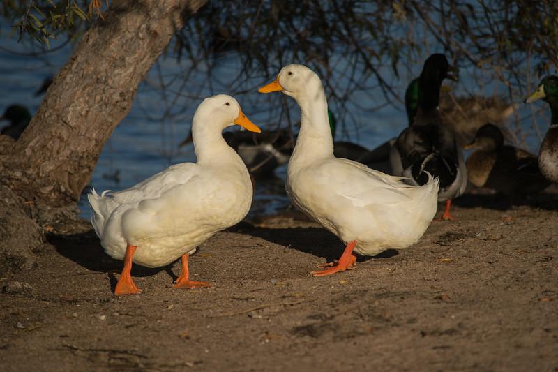 Lake Murray-8467