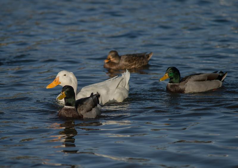 Lake Murray-8474
