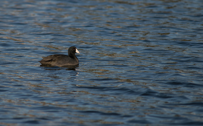 Lake Murray-8457