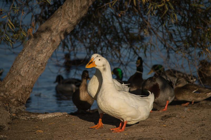Lake Murray-8463