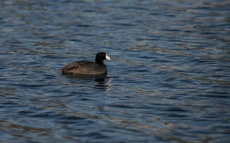 Lake Murray-8455