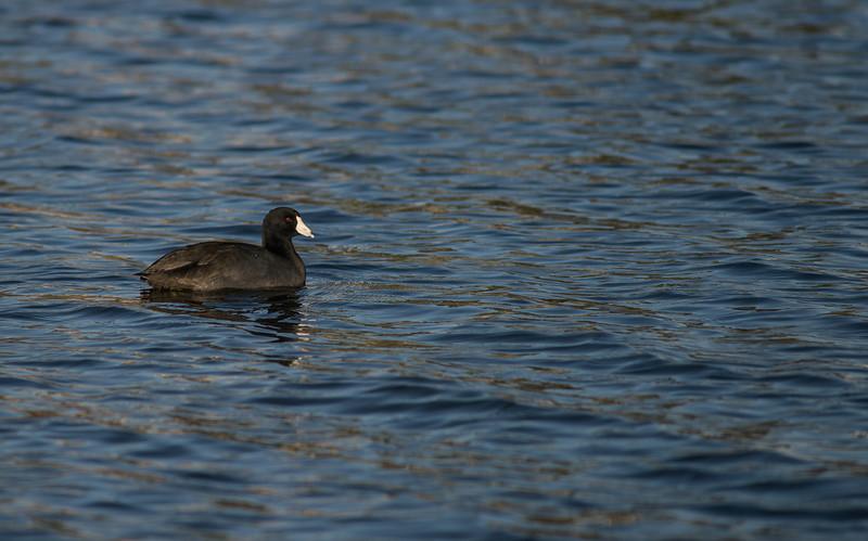 Lake Murray-8456