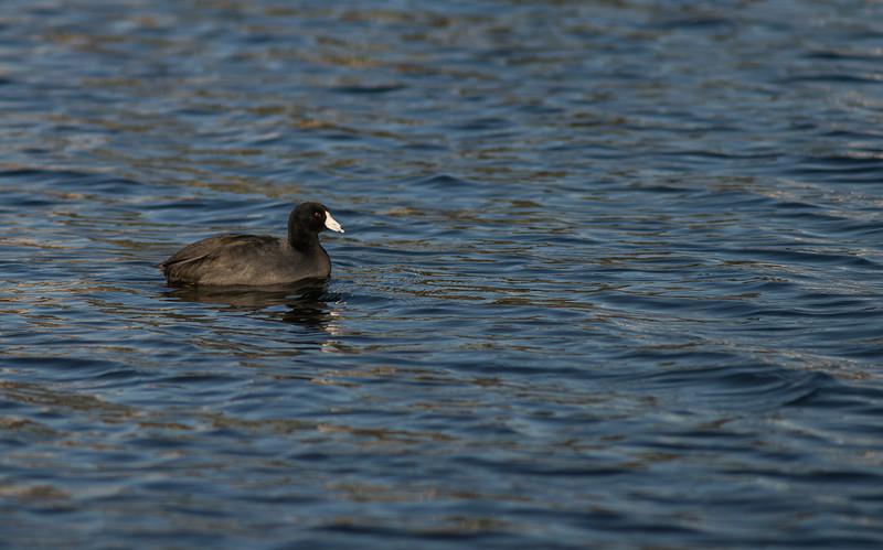 Lake Murray-8458