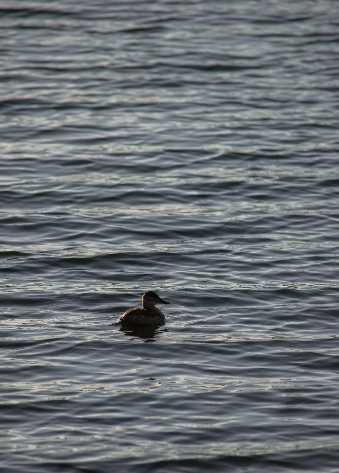 Lake Murray-8481
