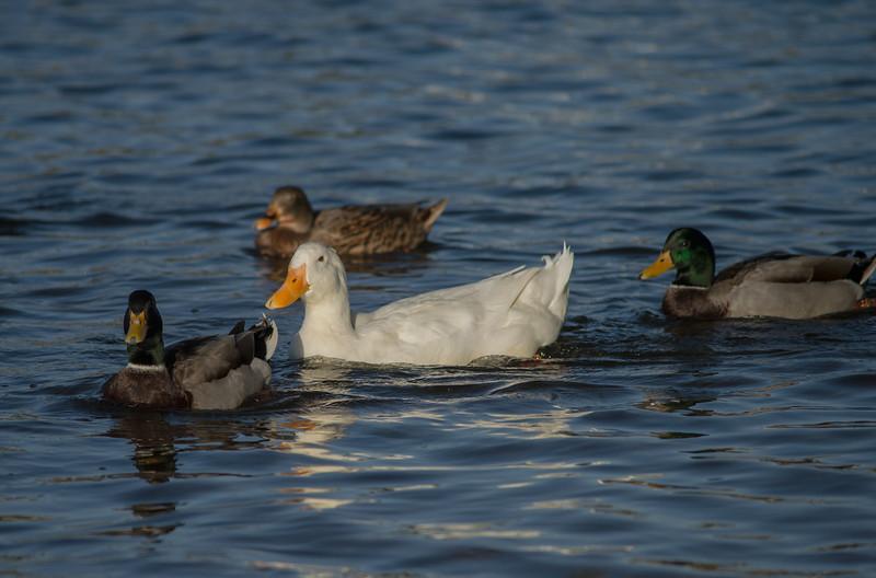 Lake Murray-8472