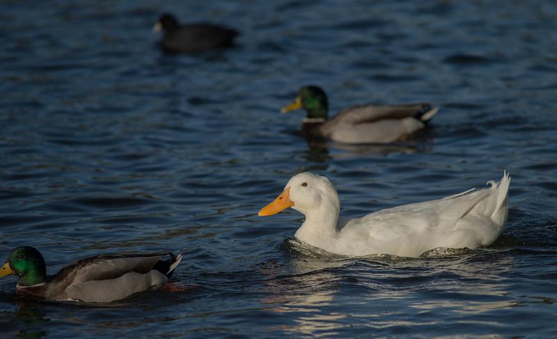 Lake Murray-8475