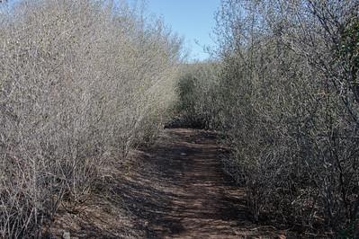 Oak Canyon_Jan2014-8064