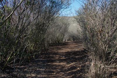 Oak Canyon_Jan2014-8097
