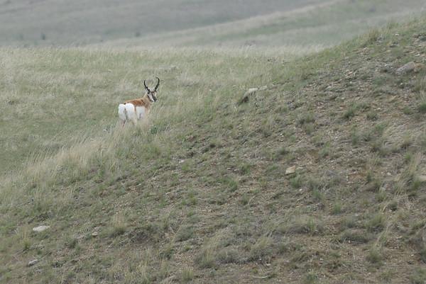 Montana Turkey Hunt 2015
