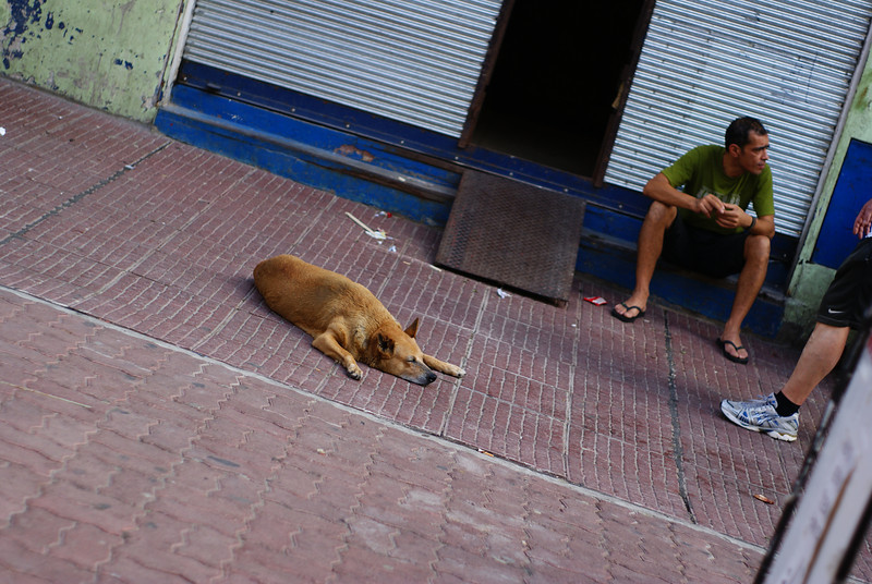 Today's daily travel photo is of an urban scene with a dog completely relaxed and sleeping on the ground in Montevideo, Uruguay.