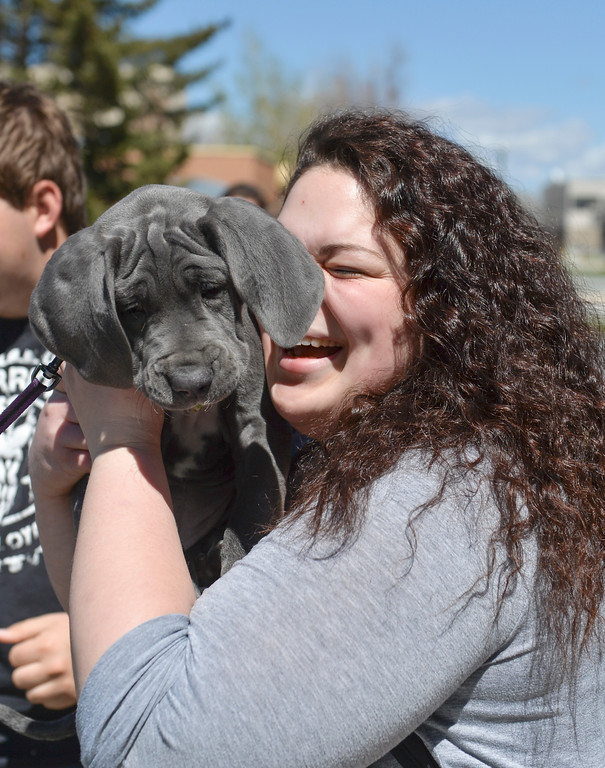 Justin Sheely | The Sheridan Press<br /> Rachel Burton holds a puppy named Kya during lunch hour Wednesday at Sheridan College. The canine friends were brought to campus to help students stress a little less in preparation of finals week.