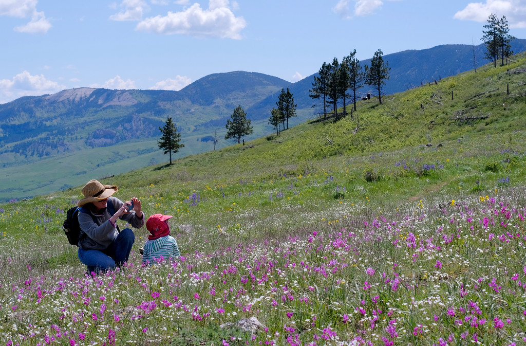 "Justin Sheely | The Sheridan Press<br /> Mary Hogarty and Isla Hogarty, 4, snap pictures of wildflowers during The Sheridan Community Land Trust and Science Kids ""Unplug"" event Saturday at the Red Grade Trail System. Families were invited on self-guided nature scavenger hunts on the paths that crisscross the east face of the Bighorn Mountains near Red Grade road."