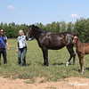 Breeding mares and foals in grass pastures