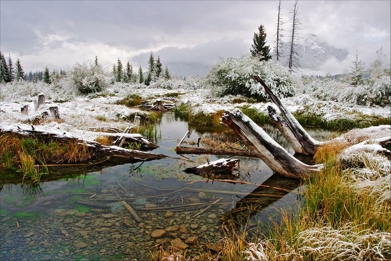 Snow-Capped Marsh