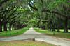 Avenue of the Oaks, Boone Hall Plantation SC