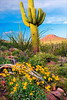 Saguaro & Wildflowers