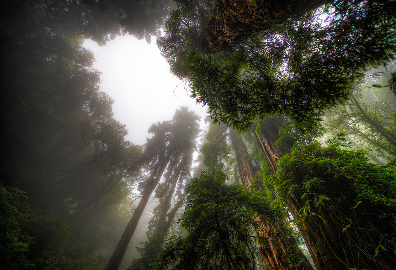 among giants | marin county