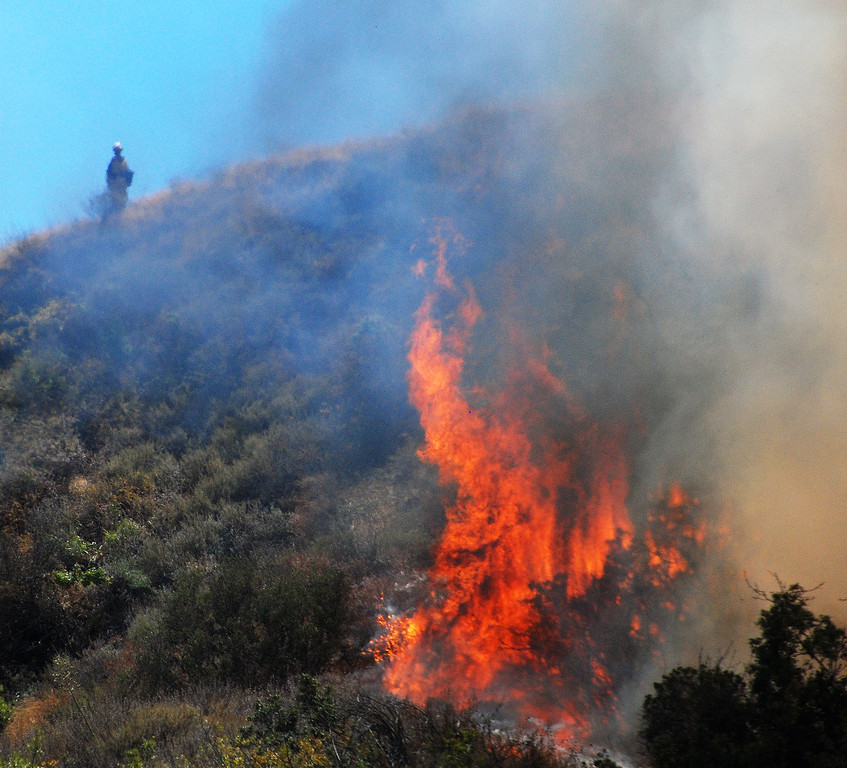 . An LA County FD Camp crewman on top of the hill keeps a close eye on flames burning toward him during a 20 acre brush fire in Towsley Canyon this afternoon.  (Photo by Mike Meadows)
