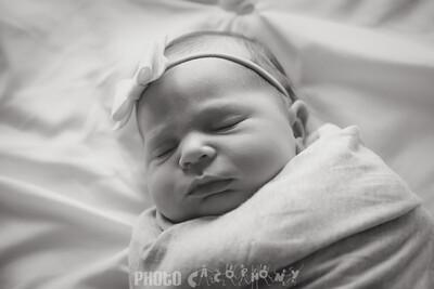 {Newborn} Finlee (7 of 41)