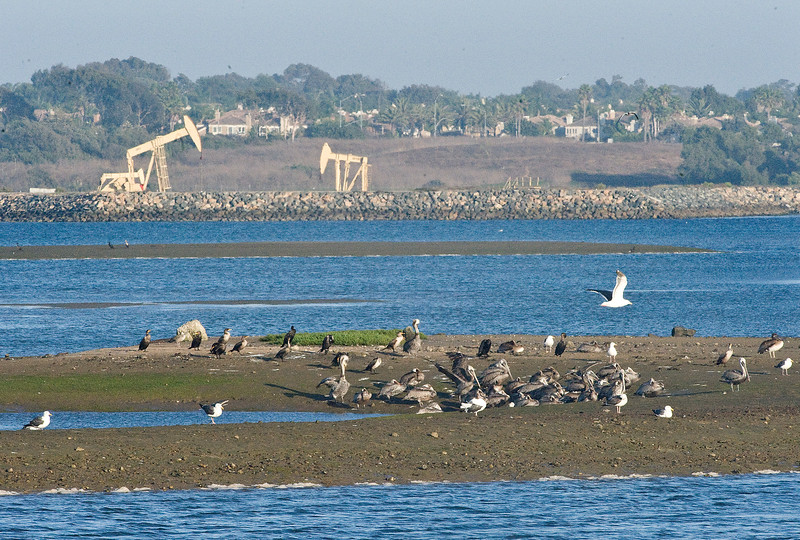 . Bolsa Chica wetlands is a life raft for wild life, according to Kelly O�Reilly. The biologist with the California Department of Fish and Game made sure reporters did not disturb nesting birds during a behind the scenes tour in 2011.   (Photo by  CINDY YAMANAKA, THE ORANGE COUNTY REGISTER)