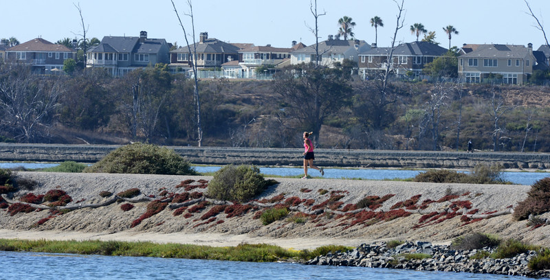 . A runner jogs along the trail in the Bolsa Chica Wetlands. The Bolsa Chica Conservancy is celebrating its 25th year. The group is the conservator of the Bolsa Chica wetlands.  (Photo by SAM GANGWER, ORANGE COUNTY REGISTER)
