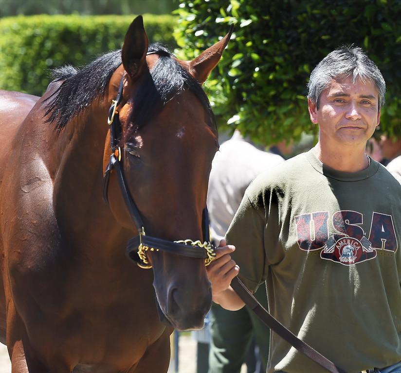 . American Pharoah with groomer Eduardo Luna. Racehorse American Pharoah returned to Southern California, Thursday, June 18, 2015, for the first time since breaking a 37-year Triple Crown drought by winning the Kentucky Derby, Preakness and Belmont Stakes. American Pharaoh was aboard an equestrian airline from Louisville, Ky., to Ontario International Airport, where he will be loaded into a van and driven to Santa Anita Park.(Photo by Walt Mancini/Pasadena Star-News)