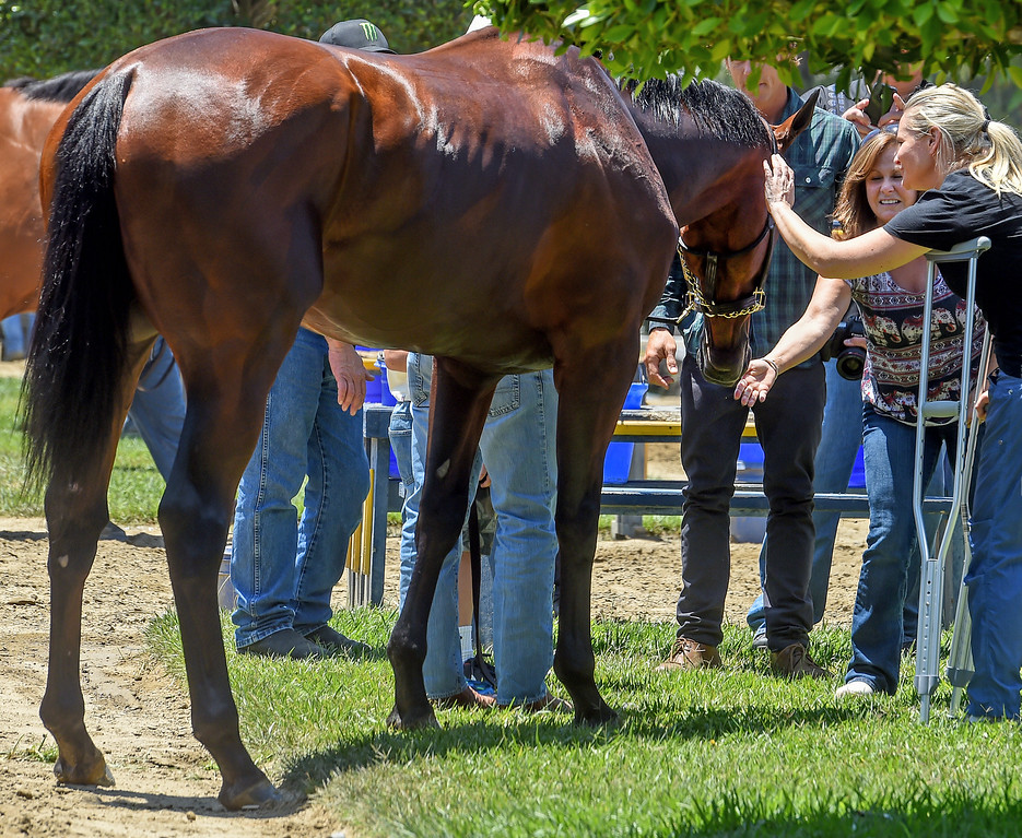 . Jill Baffert, right, recovering from hip surgery with American Pharoah.  Racehorse American Pharoah returned to Southern California, Thursday, June 18, 2015, for the first time since breaking a 37-year Triple Crown drought by winning the Kentucky Derby, Preakness and Belmont Stakes. American Pharaoh was aboard an equestrian airline from Louisville, Ky., to Ontario International Airport, where he will be loaded into a van and driven to Santa Anita Park.(Photo by Walt Mancini/Pasadena Star-News)