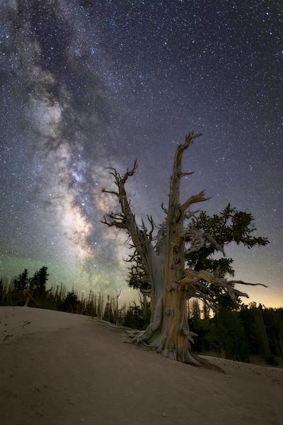 Ancient Bristlecone at Cedar Breaks