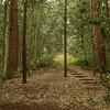 Hiking trails of Norfolk Island