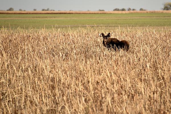 North Dakota Duck Hunt 2016