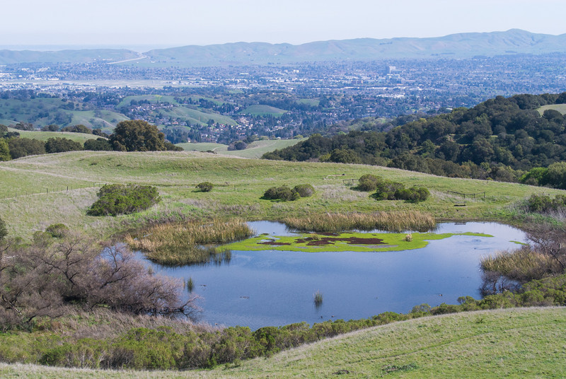 One of the lagoons in our regional park