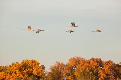 Cranes 8920