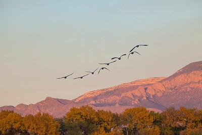 BirdsMountains 8957
