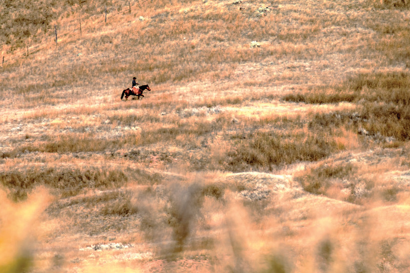 Matthew Gaston | The Sheridan Press<br>Chase Stoltz rides along a ridge searching for cattle they may have stryed away from the rest of the herd on the OW Ranch Thursday, 25, 2018.