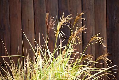 Grass C5123