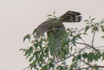 flyingHawk 04513