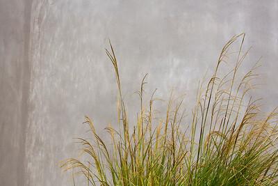 Grass C5125