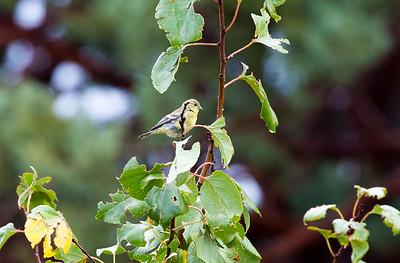 Bird Yard C5121