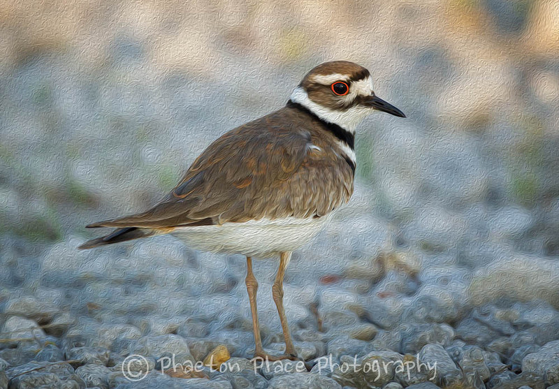 Killdeer Oil