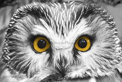 Night Owl 2013