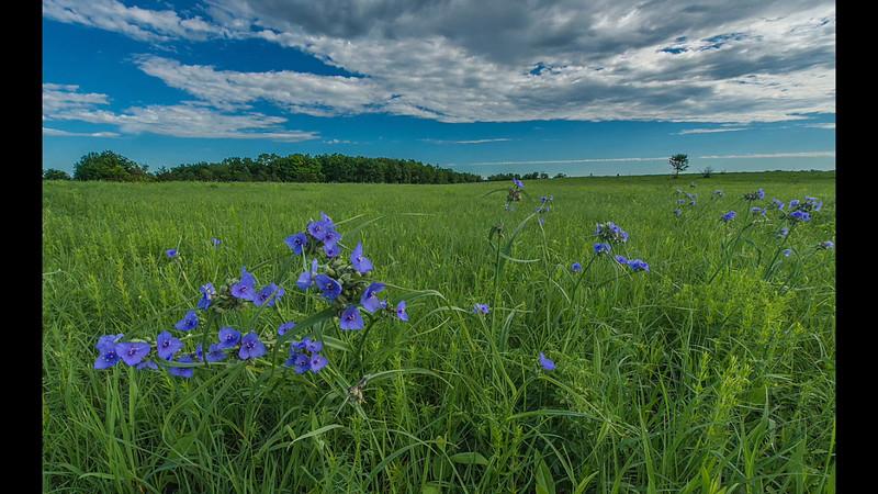 A year in a prairie