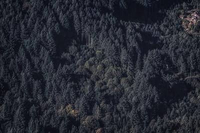 Rugged Oregon forest