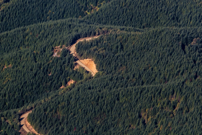 Winding logging road